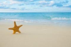 Starfish auf goldenem Sand setzen mit Wellen im weichen Sonnenunterganglicht auf den Strand Stockbilder