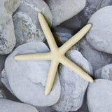 Starfish auf Kiesel lizenzfreies stockfoto