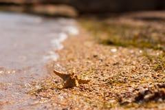 Starfish auf Kieseln in der Welle Lizenzfreies Stockfoto
