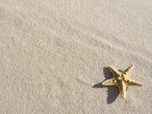 Starfish auf Sand Stockfotos
