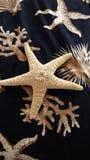 Starfish auf Seewurf Stockfotos