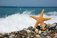 Starfish auf Steinseeküste lizenzfreie stockfotos
