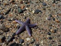 Starfish auf Strand lizenzfreie stockfotos
