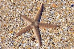 Starfish auf Strand Lizenzfreie Stockfotografie