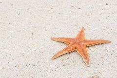 Starfish auf Strand mit Beschaffenheit Lizenzfreie Stockfotografie