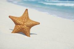 Starfish auf Strand mit blauem Ozean und Wellen Lizenzfreie Stockbilder