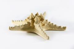Starfish auf weißem Hintergrund Lizenzfreies Stockbild