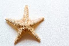 Starfish auf weißer Wand Lizenzfreie Stockbilder