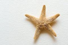 Starfish auf weißer Wand Lizenzfreies Stockfoto