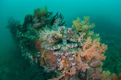 Starfish auf Wrack Lizenzfreies Stockbild