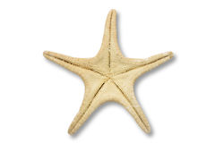 Starfish back Royalty Free Stock Images