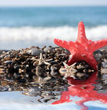 Starfish on a background of  blue sea Royalty Free Stock Image