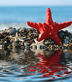 Starfish on a background of  blue sea Stock Image