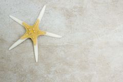 Starfish Background Stock Images