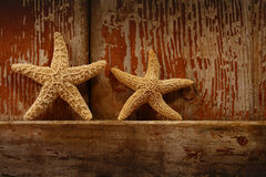 Starfish on barn door. Small starfish resting on the edge of a barn door Royalty Free Stock Image