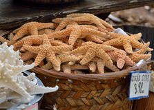Starfish in basket, Florida Royalty Free Stock Photo