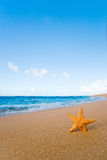Starfish beach  Stock Photo