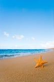 Starfish beach. Beach background with ocean and sand Stock Photo