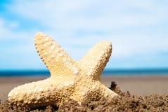 Starfish At Beach Stock Photos