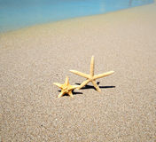 Starfish on a beach royalty free stock images