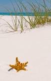 Starfish on beach Stock Photography