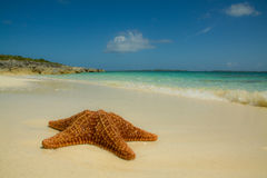 Starfish on the beach stock images