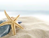 Starfish on the Beach. Starfish on the tropical Beach Royalty Free Stock Photos