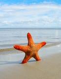 Starfish on the beach. Stock Photos
