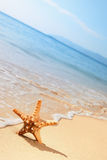 Starfish on a beach Stock Images