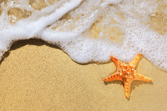 Starfish on beach Stock Photo