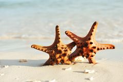 Starfish on a beach Stock Photography
