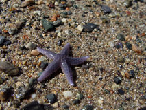 Starfish on Beach Royalty Free Stock Photos