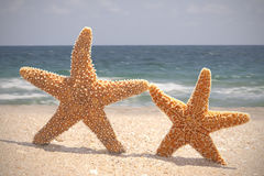 Starfish on the beach. Two Starfish Dancing on the beach Stock Photography