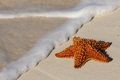 Starfish on Beach Stock Photos