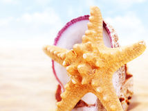 Starfish on the beach Stock Photos