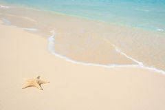 Starfish on The Beach. A starfish besides sea shore on a beach with white sand and blue water Stock Images