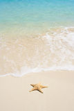 Starfish on The Beach. A starfish besides sea shore on a beach with white sand and blue water Royalty Free Stock Photos