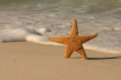 Starfish on the Beach. A single starfish in the sand with incoming foamy ocean surf Stock Photo
