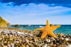 Starfish on the beach. Beautiful seastar on the beach royalty free stock photo