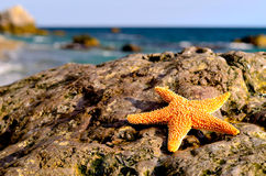Starfish on the beach. Beautiful seastar on the beach stock photos