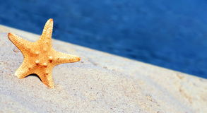 Starfish on the beach. Beautiful seastar on the beach stock photo