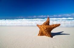 Starfish on beach Royalty Free Stock Image