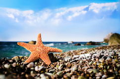 Starfish on the beach. Beautiful seastar on the  beach stock photography