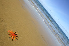 Starfish on the Beach Stock Photography