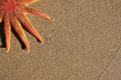 Starfish on Beach Royalty Free Stock Photo