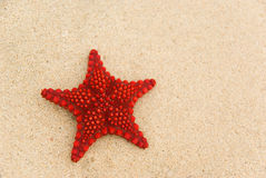 Starfish on the beach. Royalty Free Stock Photography