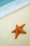 Starfish on the beach. royalty free stock image
