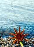 Starfish on the  beach. Seascape Royalty Free Stock Image