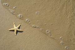 The starfish on the beach Stock Image
