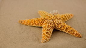 Starfish on the beach. Starfish, Summer at the beach time to relax Royalty Free Stock Photos